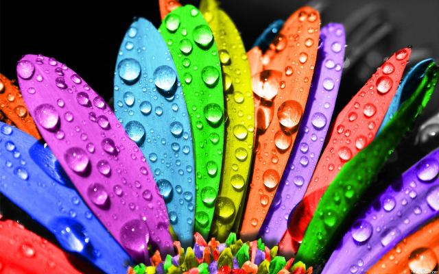 Цветотерапия эффективна при депрессии