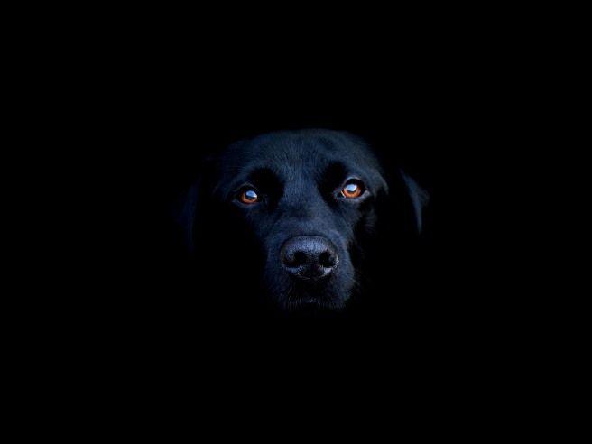 Черный цвет как влияет на человека
